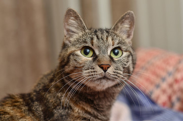 portrait of domestic cat with green eyes close up