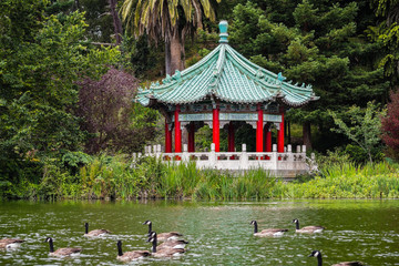 The Chinese Pavilion on the shoreline of Stow Lake; a group of Canada geese swimming on the lake, Golden Gate park, San Francisco, California Wall mural