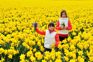 Happy kids with spring flowers on yellow daffodils field, children on vacation trip in Netherlands