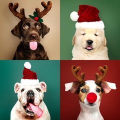 Wall Mural - Set of portraits of adorable puppies in Christmas costumes
