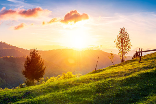 green wonderland at purple sunset