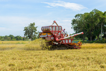 Combine harvester Working on rice field. Harvesting is the process of gathering a ripe crop