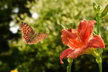 Schmetterling 447