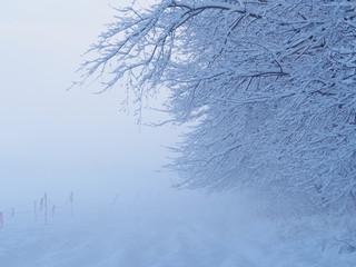 Piękny zimowy krajobraz, biały, mglisty i mroźny.