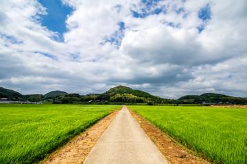 水田と田舎道