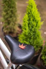 紅葉と自転車のサドル、秋イメージ