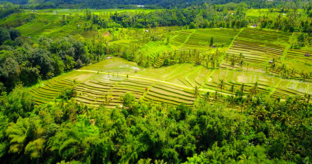 Rice Paddies In Jatiluwih, Indonesia  On Sloping Hillside Terrace