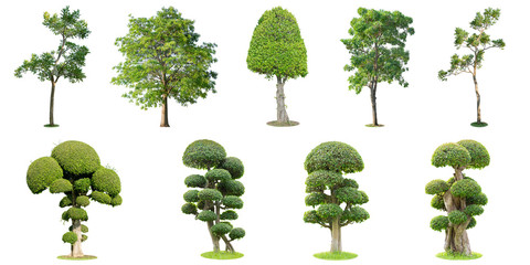 The collection of trees and bonsai tree isolated on white background. Its shrub is grown in a pot or ornamental tree in the garden.
