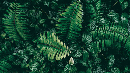 Tropical green leaf in dark tone. Wall mural