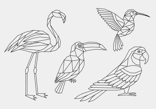 Set of abstract polygonal tropical birds. Linear geometric Hummingbird, Flamingo, parrot, Toucan. Vector illustration.