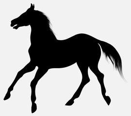 Black vector silhouette of horse with long mane, walking free. Clip art and design element for equine industry. Emblem of an agricultural animal.