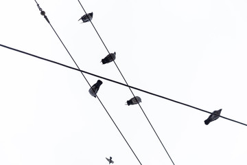 Group of birds sitting on cables