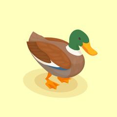 Duck Isometric Background