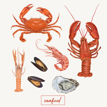 Set of seafood hand drawn illustrations