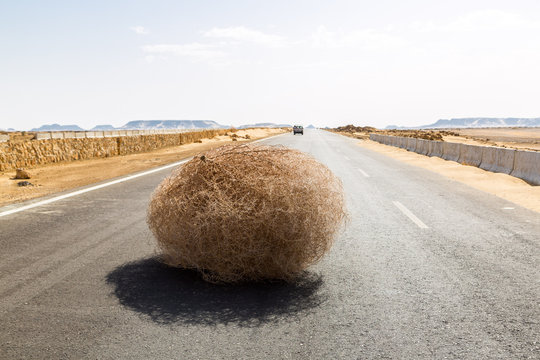 Giant tumbleweed on the highway with sandy dunes, between el-Bahariya oasis and Al Farafra oasis, Western Desert of Egypt, between Giza governorate and New Valley Governorate, near White Desert