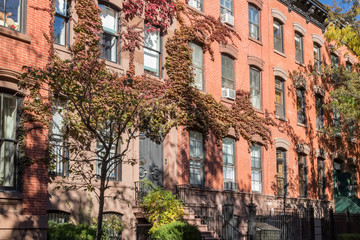 Colorful fall vine leaves cover historic buildings in the Greenwich Village neighborhood of Manhattan, New York City