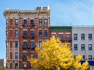 Colorful fall tree in front of buildings along First Avenue in the East Village neighborhood of Manhattan in New York City