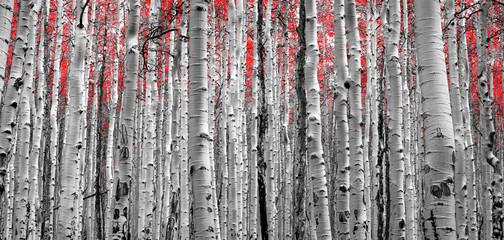 Forest of Red Trees