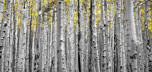 Forest of Golden Trees