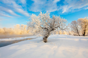 Winter landscape of trees and river in a foggy morning. Frost and cold and sunshine.