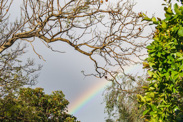 Rainbow landscape after the rain with trees