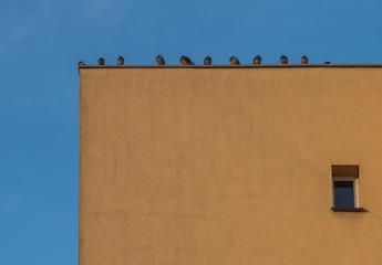 gołębie siedzące w szeregu na dachu budynku