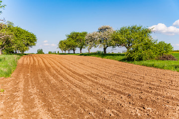 plowed acres and apple trees with blue sky