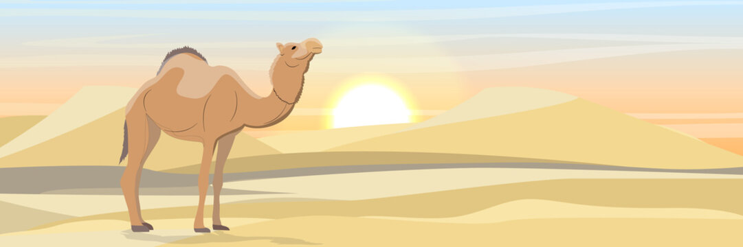 Two one-humped camel in the desert with sand dunes. Wildlife of Africa. Sahara Desert. Realistic Vector Landscape
