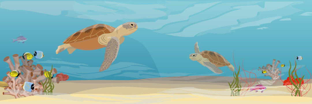 Two Green sea turtle swimming under water. Tropical underwater landscape. Warm water. Coral reef with coral, sea sponges, sand and stones. Realistic Vector illustration of a sea life