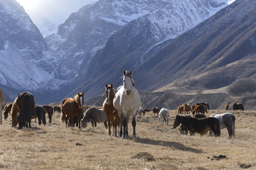 Wild horses graze in the snowy mountains on a Sunny autumn day.