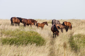 Herd of wild horses on the field