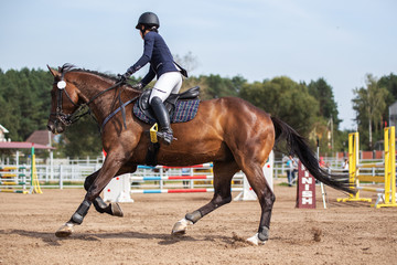 Horse and rider. Equestrian sport