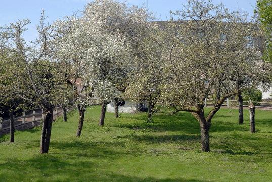 Ville de Salbris, arbres en fleurs et prairie, département de la Manche, France
