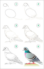 Page shows how to learn step by step to draw a cute pigeon. Developing children skills for drawing and coloring. Back to school. Vector cartoon image.