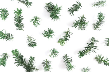 Christmas modern composition. Coniferous tree branches on white background. Christmas, New Year, winter concept. Flat lay, top view, copy space