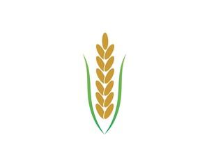 rice organic vector icon template