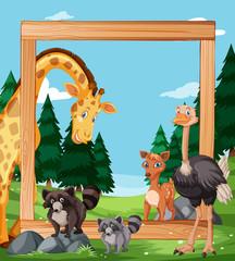 Wild animal on wooden frame