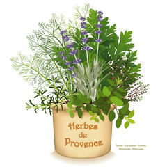 Herb de Provence clay garden planter, classic cooking herbs of southwestern France, Rosemary, Sweet Fennel, Italian Flat Leaf Parsley, Thyme, Oregano, Lavender, isolated on white background.