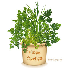 """Herb Garden Clay Planter with traditional French Fines Herbes or """"fine herbs"""", Chervil, French Tarragon, Sweet Marjoram, Chives, Italian Parsley, isolated on white background."""