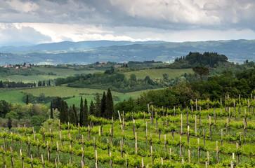 Landscape in Tuscany, Italy. Beautiful wineyard countryside