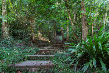 The steps at the start of a trekking trail through the jungle