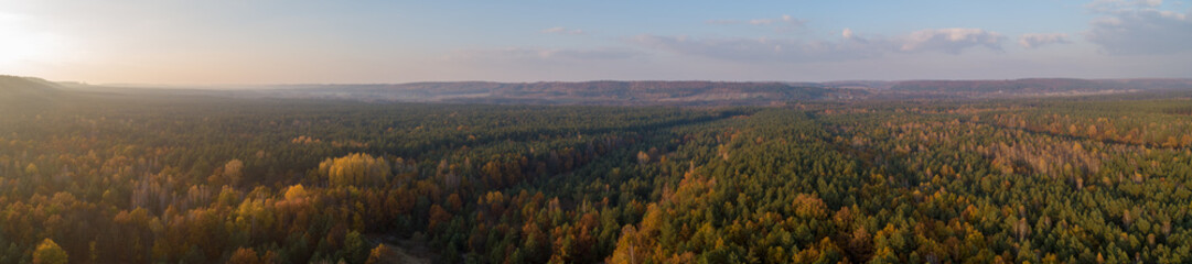 autumn forest, yellow trees, from the air