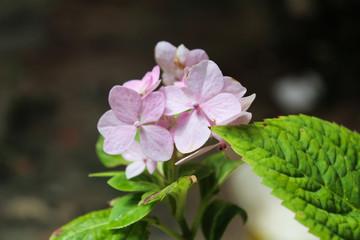 pink flower flower in the garden