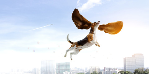 Dog fly in sky