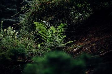 Waldboden mit Farn bedeckt