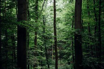 Grüner frischer Laubwald im Nationalpark Harz