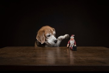 Dog with Santa Claus doll