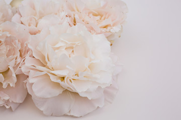 pink flowers bouquet in white background