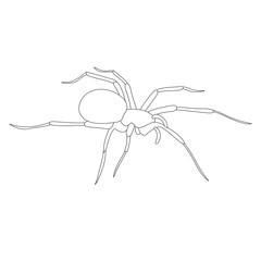 sketch spider, contour on white background