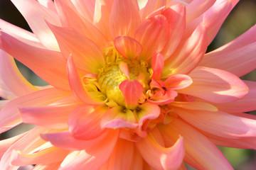 Blumen 983